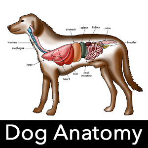 Dog Anatomy : Canine Anatomy 7.0