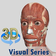 Visual Muscles 3D